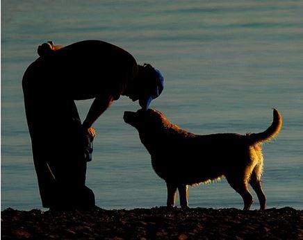 cane e padrone affetto